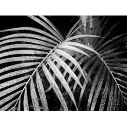 Картина Palm leaves 100х100 cm