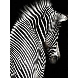 Картина Tired zebra 70х100 cm